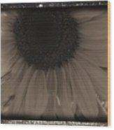 Diatrop Three Quarter Sunflower Wood Print
