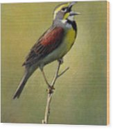 Dickcissel Summer Song Wood Print