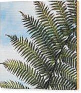 Dicksonia Frond Wood Print