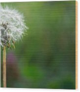 Diente De Leon Wood Print