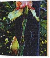 Digital Painting Pink And Yellow Iris 6758 Dp_2 Wood Print