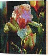 Digital Painting Vibrant Iris 6764 Dp_2 Wood Print