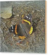 Digital Red Admiral Butterfly - Vanessa Atalanta Wood Print