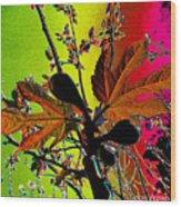 Figtree Leaves 4 Wood Print