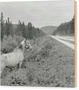 Dilemma On Highway #1, Chickaloon, Alaska Wood Print