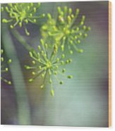 Dill Abstract On Mint Green And Plum Wood Print