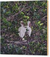Ding Darling Wildlife Refuge I Wood Print