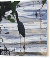Ding Darling Wildlife Refuge Iv Wood Print