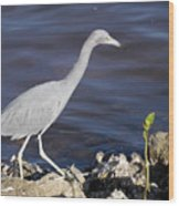 Ding Darling Wildlife Refuge Vii Wood Print