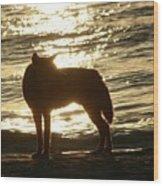 Dingo Sunset Wood Print