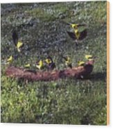 Goldfinch Convention Wood Print