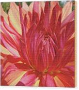 Dinner Plate Dahlia Flower Art Print Orange Baslee Troutman Wood Print
