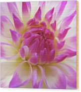 Dinner Plate Dahlia Flower Art Prints Canvas Floral Baslee Troutman Wood Print