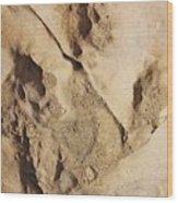 Dino Tracks In The Desert 2 Wood Print