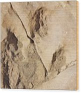 Dino Tracks In The Desert 3 Wood Print