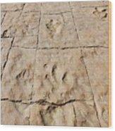 Dino Tracks In The Desert 4 Wood Print