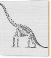 Dinosaur: Brachiosaurus Wood Print