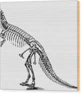 Dinosaur: Ceratosaurus Wood Print