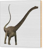 Diplodocus Profile Wood Print