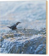 Dipper Searching For Food Wood Print