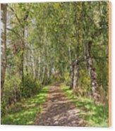 Dirt Path In A Birch Grove  Wood Print