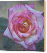 Dirty Pink Rose Wood Print