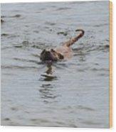 Dirty Water Dog Wood Print