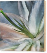Dirty White Lily 2 Wood Print