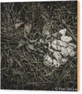 Discarded Wood Print