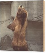 Disco Bear  52891-1 Wood Print