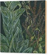 Ditchweed Fairy Mullein Wood Print