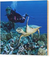 Diver And Green Sea Turtle Chelonia Wood Print