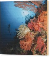 Diver Swims By A Soft Coral Reef Wood Print