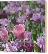 Divine Tulip Display Wood Print