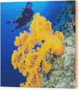 Diving, Australia Wood Print by Dave Fleetham - Printscapes