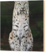 Divinity Wood Print by Big Cat Rescue