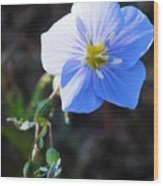 Dixie Blue Wood Print