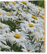 Dizzy With Daisies Wood Print