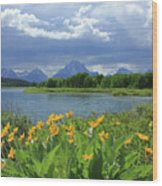 Dm9235 Mt. Moran From Oxbow Bend Wood Print