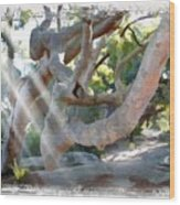 Do-00044 Mount Ettalong Wood Print