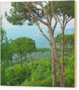 Do-00301 Pine Trees Forest In Aaraya Wood Print