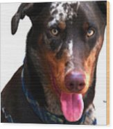 Doberman Australian Shepherd Cattle Dog  Wood Print