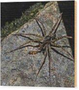 Dock Spider Wood Print