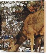 Doe And Buck Wood Print