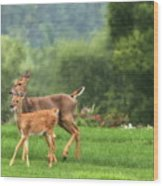 Doe And Fawn Wood Print