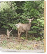 Doe At Suttle Lake Wood Print