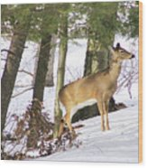 Doe Emerges Wood Print