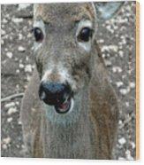 Doe Eyed Deer Talk Wood Print