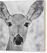 Doe Eyes - Bw Wood Print
