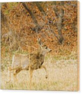 Doe High Stepping On Bald Mountain Wood Print